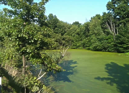 Nutrients in polluted runoff promote algae and weed infestations.