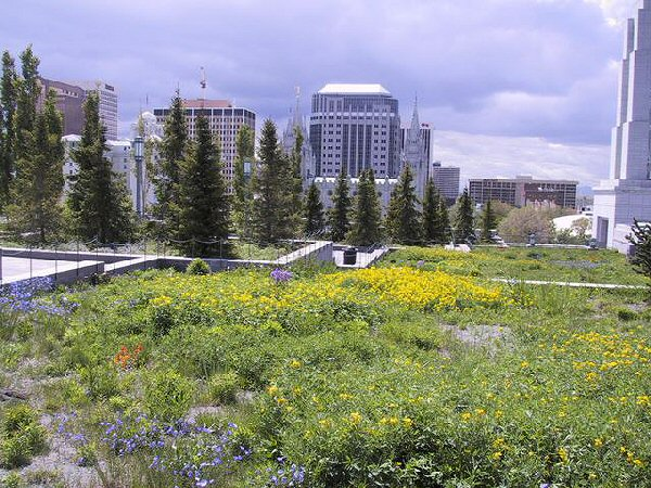 LDS Green Roof