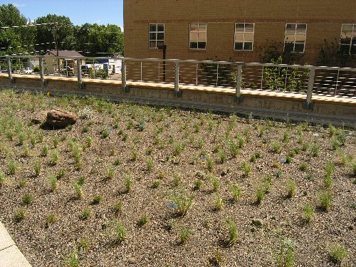 Area on top of Biodiversity Conservation Center creates a classroom on the room for children and students to learn about green roofs.