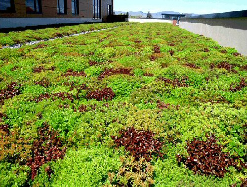 Beautiful Green and Red vegetation on the The Montana State Fund Building Green Roof.