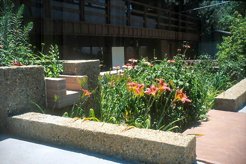 Planter box of rainwater collected in Boulder, CO.