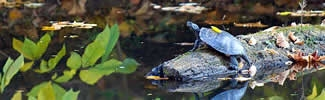 A turtle sitting on a log in a stream