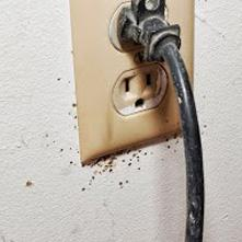 Bed bugs around an electrical outlet