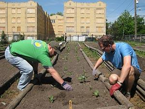 two men work in a raised garden bed in an urban setting