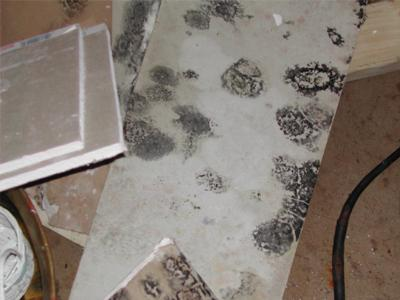 Sections of moldy gypsum board.