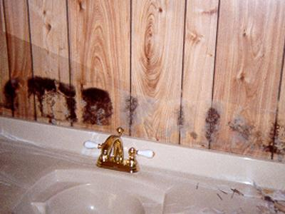 Plumbing leak inside wall led to mold on paneling behind mirror above bathroom sink.