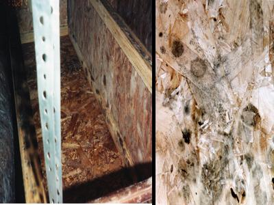 Mold growing on oriented strand board used for structural wood floor in crawl space.