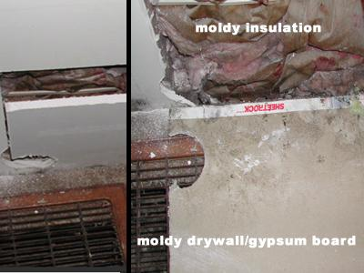 Opening a wall with a utility knife to minimize disturbance to mold in the wall cavity.