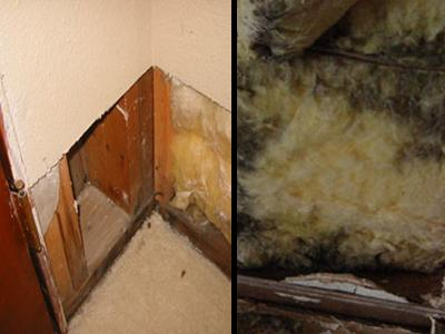 Looking for mold in wall cavities by removing a section of drywall.