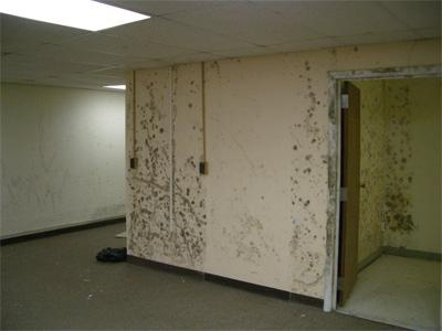 Mold on gypsum wallboard.