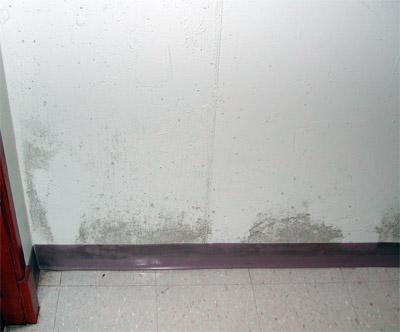 Mold on painted concrete in a school building.