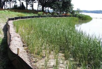Example of Living Shorelines restoration work performed by students from Virginia Institute of Marine Science