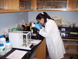 Biologist working on biomonitoring samples.