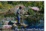 photo by vernal pool assn