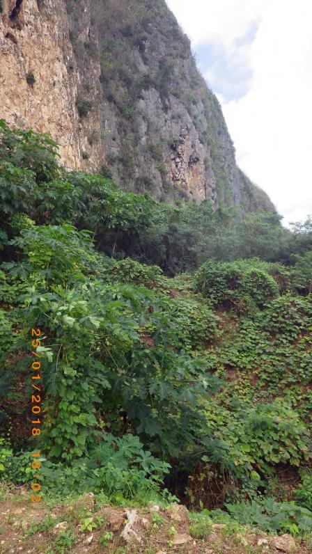 Cliff and jungle vegetation.