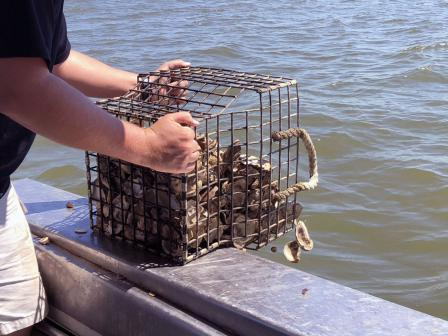 MGM Resorts' Las Vegas properties, including Bellagio, collect oyster shells from restaurants to send to Maryland to help restore oyster beds in the Chesapeake Bay.
